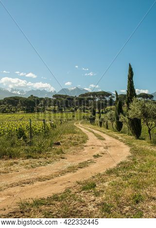 Morning Sun Over A Dirt Track Leading Through A Vineyard At Calvi In The Balagne Region Of Corsica W