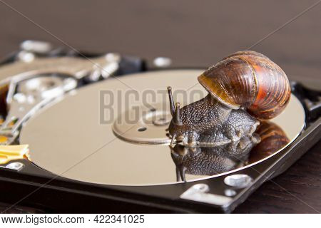 Brown Snail Creeps On A Hard Drive On Wood Table