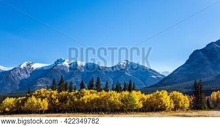 Scenic shores of Abraham Lake. The first snow has already fallen on the peaks. The yellow foliage of birches and aspens is mixed with green conifers. Great Canadian Rockies.