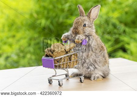 Easter Holiday Bunny Animal And Shopping Online Concept. Adorable Baby Rabbit Brown Pushing Green Sh