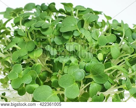 Bok Choy Micro Greens Isolated On White Background With Copy Space. Micro Green Arugula Sprouts. You