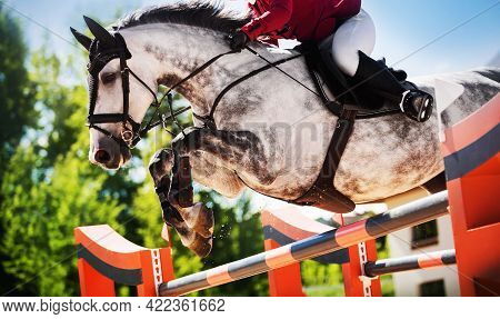 A Beautiful Dappled Gray Racehorse With A Rider In The Saddle Jumps The High Orange Barrier On A Cle