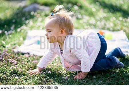 Pensive Little Girl With A Ponytail On Her Head Crawls Along A Green Lawn Among Flowers Near A Blank