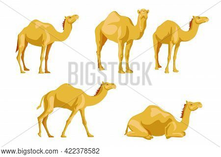 Camels Sideways Illustrations Set. Cartoon Collection Of Wild Animals With Humps, Caravan Of Dromeda