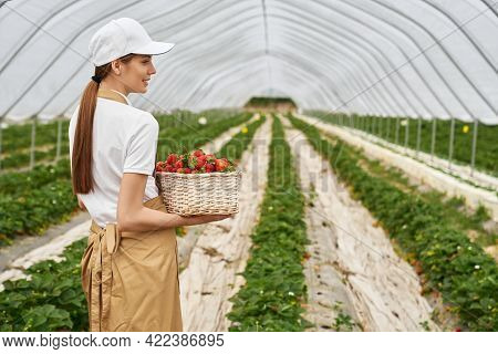 Side View Of Young Female Gardener In Cap And Apron Carrying Basket With Freshly Picked Strawberries