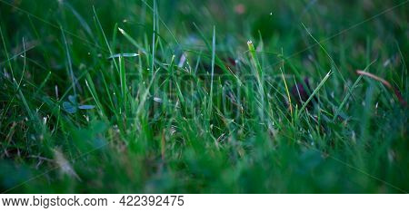 Blurred Grass Green Background, Close Up Pictures Of Leaves In A Home Garden, Blurred Green Backgrou