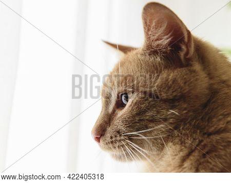 Focused Cat. Cat Pictures, Cat Eyes, Pictures Of The Most Beautiful Cat, Cute Cat, Street Cat, Beaut
