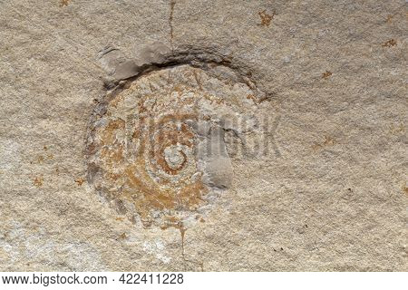 Ammonite Imprint On Solnhofen Limestone, From The Jurassic Of Southern Germany
