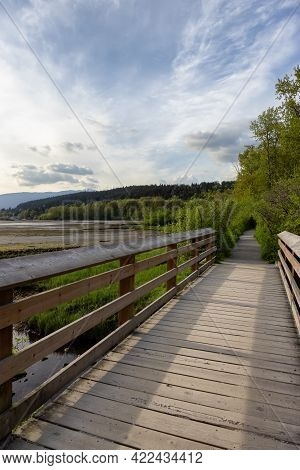 View Of A Wooden Path With Fresh Green Trees In Shoreline Trail, Port Moody, Greater Vancouver, Brit