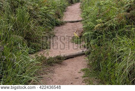 Stepped Hiking Pathway Bordered By Grasses And Ferns