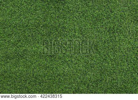 Green Grass Texture Background. Grass Field Top View