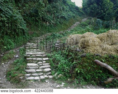 Antique Stone Stairs Of Panchase Route Way For Trekking In Forest On Anadu Hill Mount For Nepali Peo