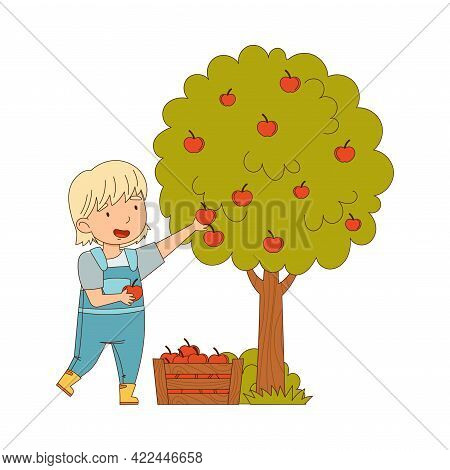 Little Girl Gathering Apples From Tree In Wooden Crate Working On The Farm Vector Illustration