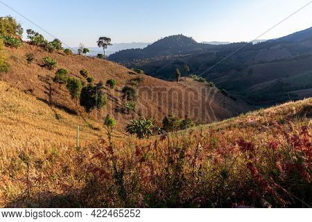 Dry Condition And Rainless Turning Green Grass Valley To Brown Color On Hill Slope With Trees And Bu