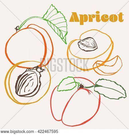 Apricot Line Art Hand-drawn Multicolor Modern Vector Illustration. Colorful Line Art Summer Fruit De