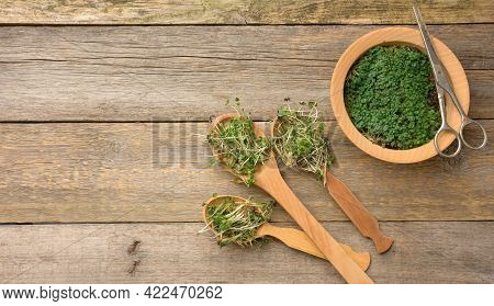 Green Sprouts Of Chia, Arugula And Mustard In A Wooden Spoon On A Gray Background From Old Gray Boar