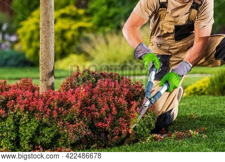 Professional Caucasian Garden Worker In His 40s Trimming Plant Branches Using Large Scissors Tool.