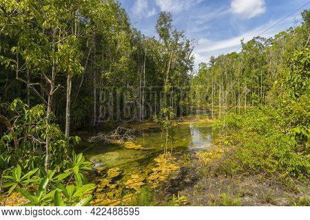 Wet Forest At Emerald Pool Travel Location Of Krabi, Thailand.