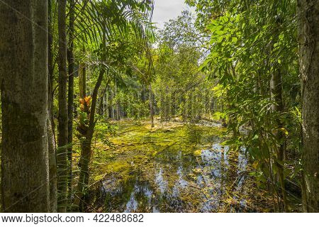 Khao Pra Bang Khram Wildlife Sanctuary Way To Emerald Pool Aka Sa Morakot Tourist Destination. Natio