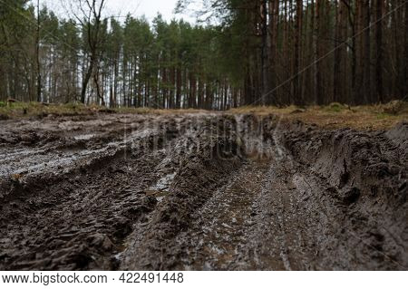 Rural Muddy Dirt Road In Early Spring After Rain Against A Background Of Bare Trees And Green Firs.
