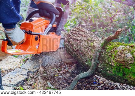 Tree Felling With A Large Chainsaw Cutting Into Tree Trunk Motion Blur Of Sawdust And Chippings An U