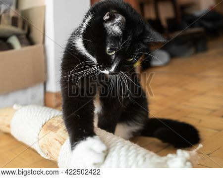 Black And White Cat Touching Makeshift Cat Tree Lying On Floor At Home With His Paw.