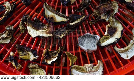 Dried Mushrooms In A Red Dryer. The Process Of Drying Mushrooms In The Drying Cabinet Close-up
