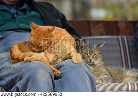 A Loving Relationship Between Humans And Their Domestic Cats And Their Trust