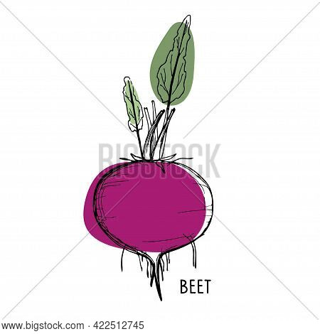 Beet Root. Line Art Style With Bright Burgundy And Green Spots. Red Beet With Green Leaves Vector Il