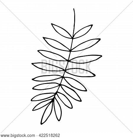 Fern Leaf In Doodle Style. Hand Drawn Palm Branch Or Other Tropical Plant. Vector Illustration Isola