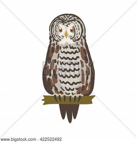 Owl Specie As Nocturnal Bird Of Prey With Hawk-like Beak And Forward-facing Eyes Perching On Tree Br