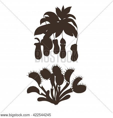 Black Silhouettes Of Carnivorous Plants Isolated On White Background. Vector Illustration.