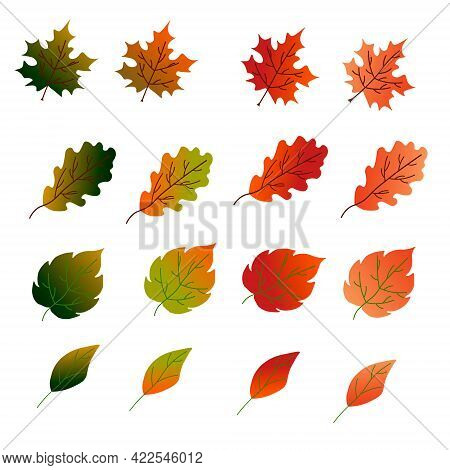 Colored Autumn Leaves. A Set Of Leaves - Maple, Oak, Birch And Others. Vector Illustration. For The
