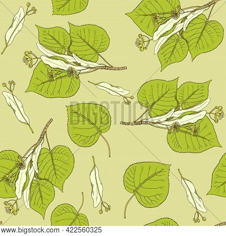 Seamless Pattern With Vintage Linden Flowers And Branches.