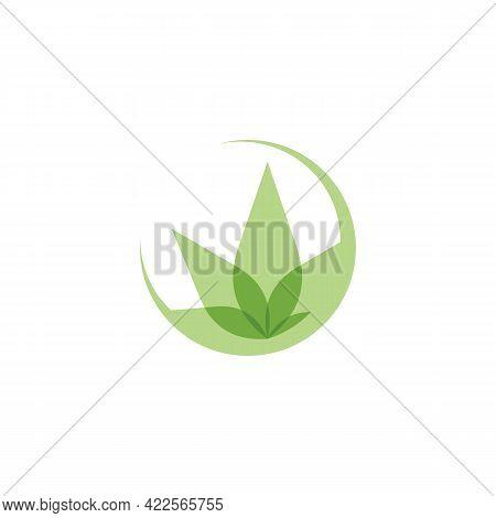 Creative Cannabis Leaf And Hemp Oil Vector Logo Icon Template For Cbd Cannabidiol Cannabis Hemp Mari
