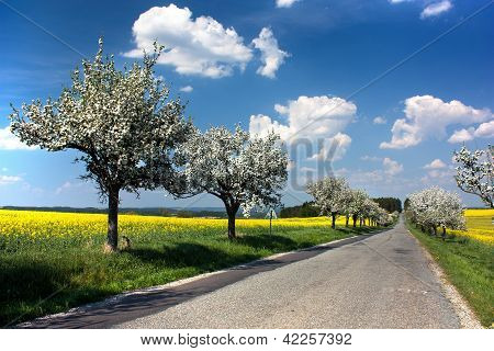 springtime beautiful view of road, alley of apple tree, field of rapeseed and sky with clouds