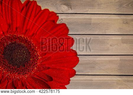 Close-up Of Half Of A Red Gerbera With Dew Drops On A Painted Wooden Background. Summer Background.
