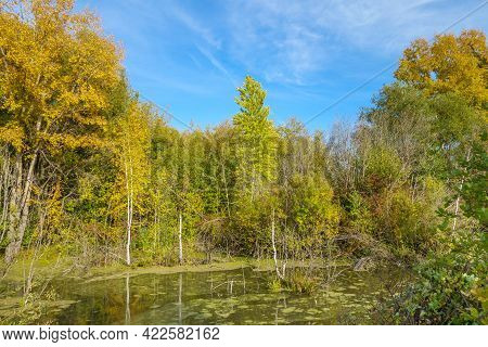 Quiet Lake In The Forest. The Water Surface Is Covered With Islets Of River Vegetation. The Weather