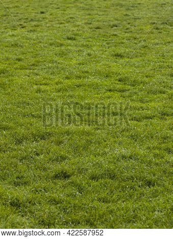 Green Meadow Or Lawn Useful As A Grass Background.
