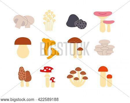 Mushrooms Icon Set. Vector Isolated Flat Color Icons. Glyph Design. Illustrations Of Champignon Enok