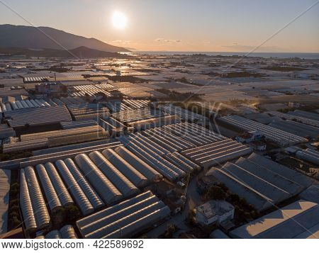 Aerial Shot Of Endless Greenhouses At Sunrise In Demre, Turkey