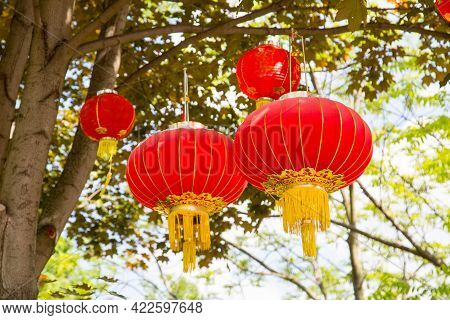 Bright Red Traditional Chinese Lanterns Hanging From Tree Branches On A Clear Sunny Day. Traditions