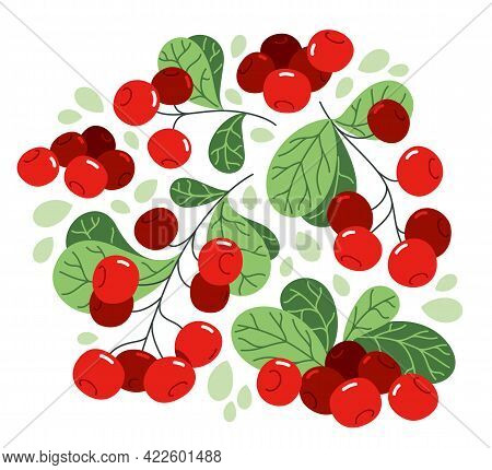 Fresh Delicious Ripe Wild Lingonberry Vector Flat Illustration Isolated On White, Natural Diet Food