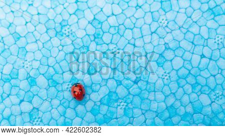 .a Red Ladybug Insect On A Blue Textured Foam Board Creates A Contrast Of Red With Sky Blue.