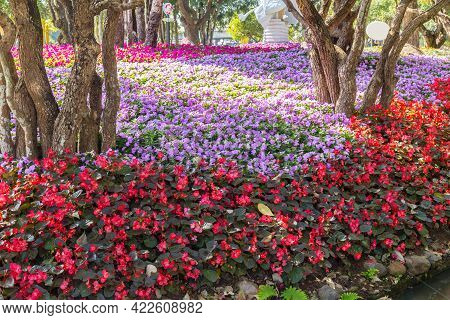 Beautiful Many Flowers In The Garden At Public Park.