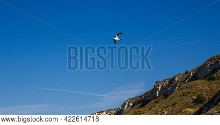 Seagull At Sea. Seagull By The Rock. Seagull By The Sea. Seagull And Blue Sky.