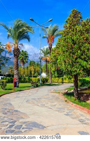 Pedestrian Walkway And Palm Trees In A City Park. Tropical Landscape