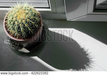 Cactus On The Windowsill Under The Sun. Beautiful Shadow From A Cactus On The Windowsill. Abstract I
