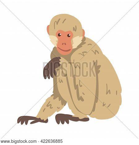 Monkey As Arboreal Herbivorous Ape In Sitting Pose Vector Illustration