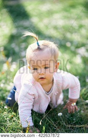 Pensive Little Girl With A Ponytail On Her Head Crawls Along A Green Lawn Among Flowers